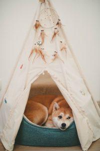 Un traitement naturel pour le bien être de votre chien